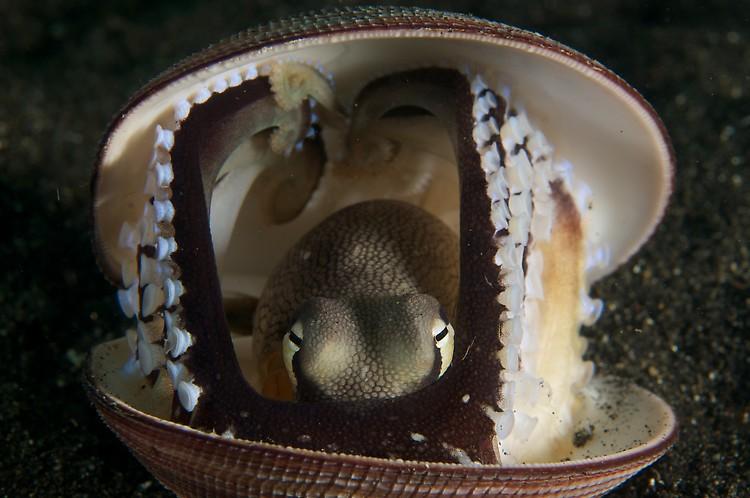 coconut octopus 2