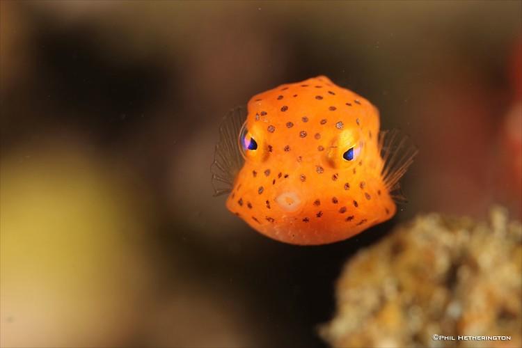Box-Fish-_-PH