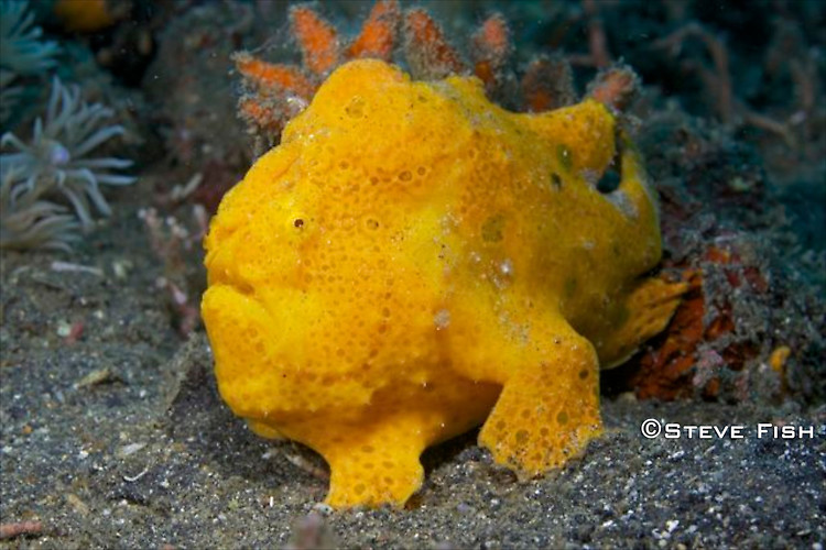 Lembeh Collection 4