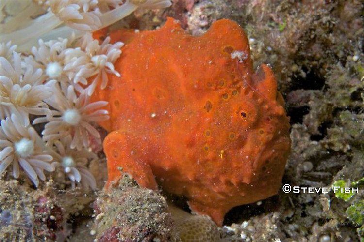 Lembeh Collection 2