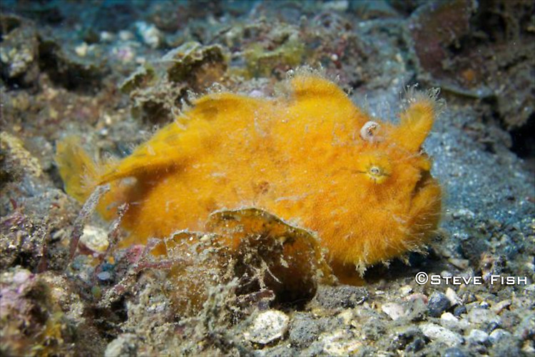 Lembeh Collection 5