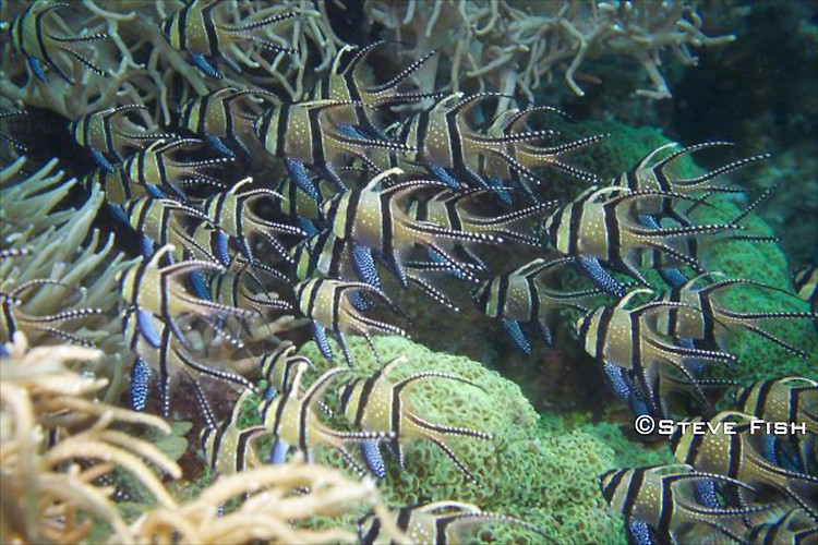 Lembeh Collection 3