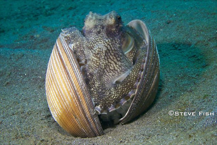 Lembeh Collection 1