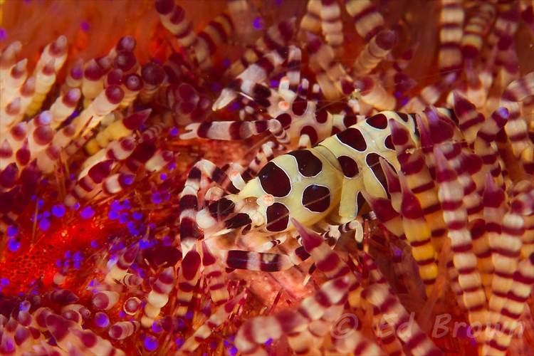 Critters from Lembeh Strait, North Sulawesi, Indonesia