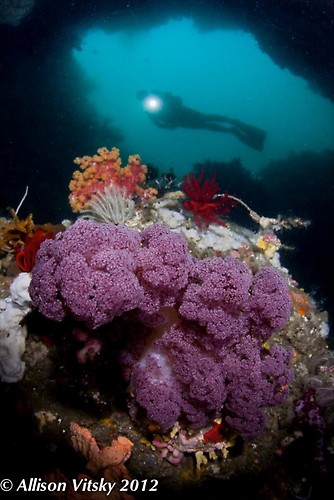 Soft Coral Wide Angle - Lembeh Strait Indonesia 2012