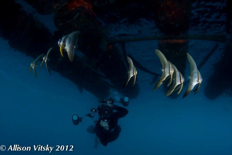 Bat Fish Wide Angle - Lembeh Strait Indonesia 2012