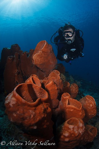 Sponge Wide Angle - Lembeh Strait Indonesia May 2013