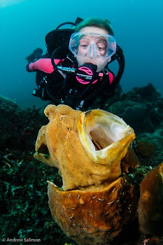 Giant Frogfish - Diver-0711