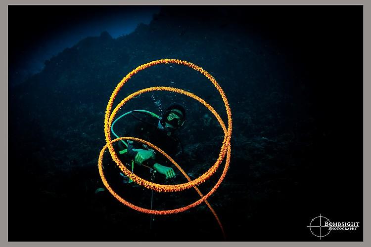 SEA WHIP CORAL (Junceella sp.), Lembeh strait, Indonesia, June 2013